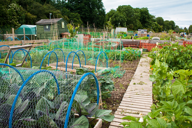 veg-patch