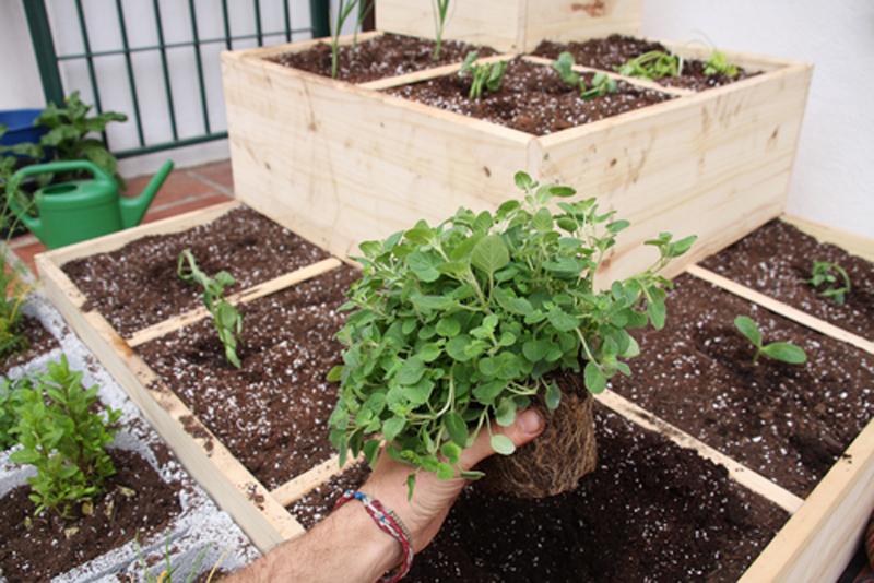 Small garden for veg